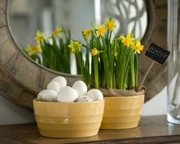 Easter Bulbs