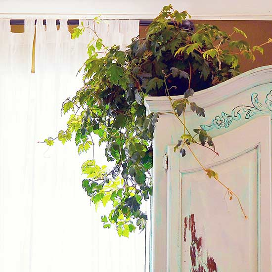 Plants That Will Grow Better